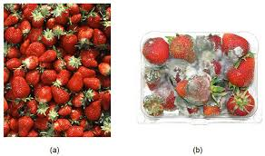 Pathogen control of fruits and vegetables