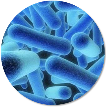Water disinfection facility water system solutions for Salmonella swimming pool